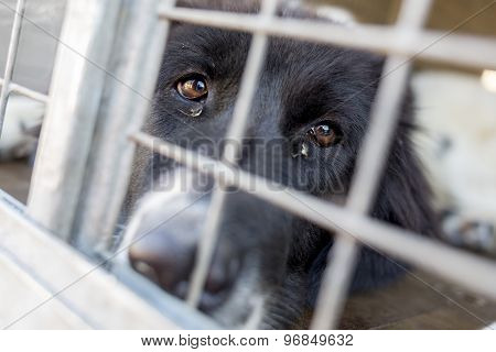 Ownerless Dog In A Cage