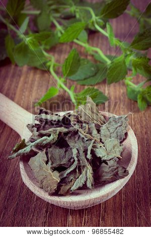 Vintage Photo, Dried And Fresh Lemon Balm On Wooden Table, Herbalism
