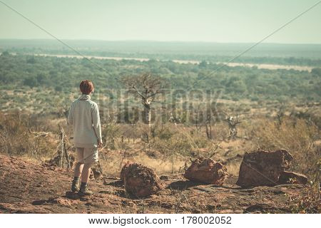 Tourist walking in the bush and looking at view with huge baobab trees in the background. Adventure and exploration in South Africa. Toned image.