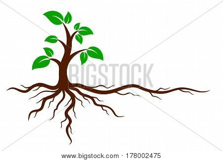Logo of the green tree with the root system.