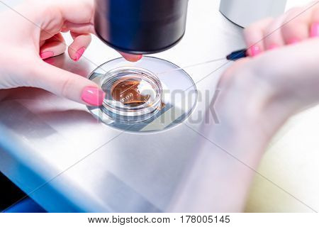 Close Up Medical Research Technician Putting Some Substance Into Petri Dishusing Under The Microscop