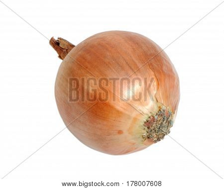 The brown onion isolated on white background