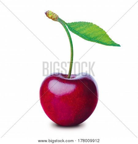 One cherry isolated on a white background