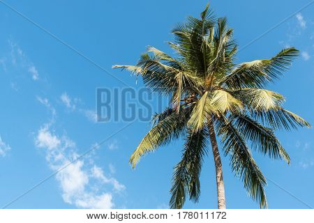 Palm tree with some white clouds and blue sky on a sunny day