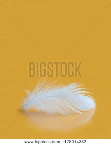 Fluffy white feather texture macro view. Luxury softness concept. Bird plumage feathering on yellow background. Shallow depth of field, soft focus. Copy space vertical photo.