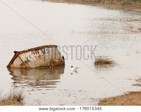 A submerged boat and a gull in the water next to it.