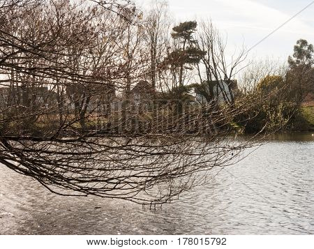 A bare branch hangs out across Wivenhoe lake.