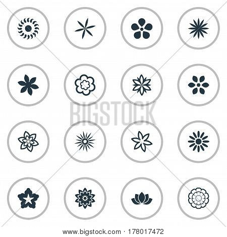 Vector Illustration Set Of Simple Rose Icons. Elements Orchids, Sword Lily, Cypress And Other Synonyms Water Lily, Victoria And Narcissus.