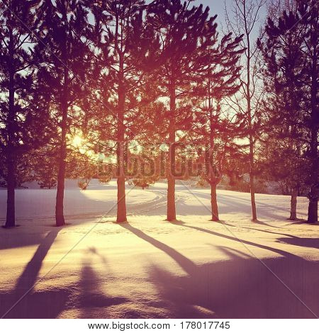 Beautiful sunset though trees in winter - Instagram effect
