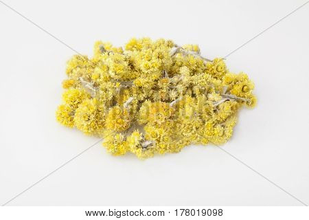 Dwarf everlast flowers isolated on the white