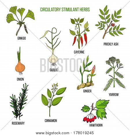 Circulatory Stimulant Herbs