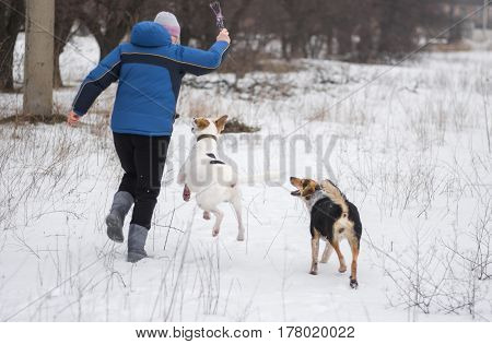 Happy trio - woman dancing with two mixed-breed dogs in winter park