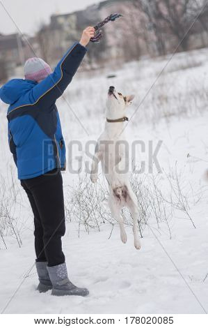 Mixed breed white dog doing high jump trying to catch up the rope in master's hand while playing in winter field