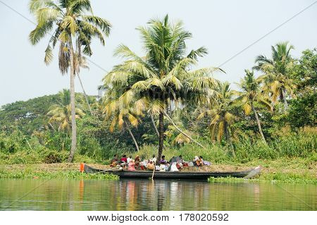 People Resting On The Shade Of A Palm Tree