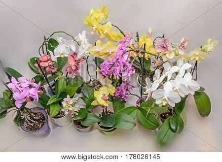 Many Types Of Colored Orchid  Branch Flowers, Flowerpots And Vases, Isolated On White Background