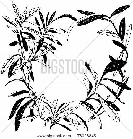 Spurge hand drawn illustration. Round decorative frame