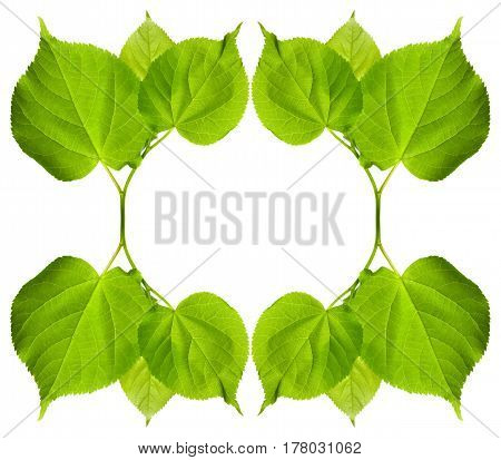 Frame of green tilia leaves. Isolated on white background with copy space.