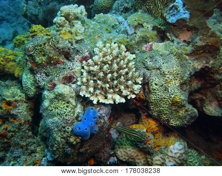 The surprising underwater world of the Bali basin, Island Bali, Lovina reef, stone coral
