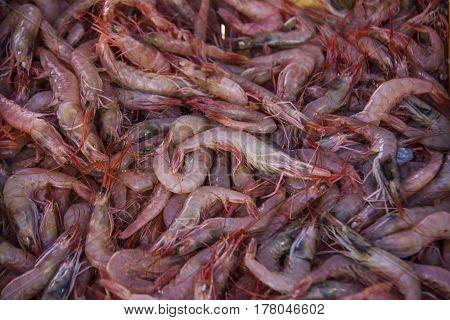 Fresh Shrimps on display in fishermen market. Background texture