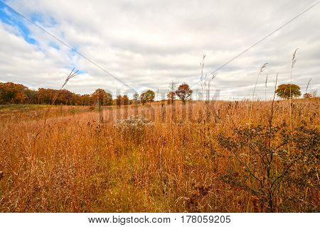Prairie grass in Fall Colors at the International Crane Foundation near Baraboo Wisconsin