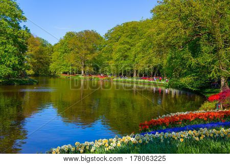 Lisse Netherlands - May 7 2016: Keukenhof park Netherlands. Flower bed of colourful tulips in spring. Colorful tulips in the Keukenhof park Netherlands. Fresh blooming tulips in the spring garden. Blooming flowers in Keukenhof.