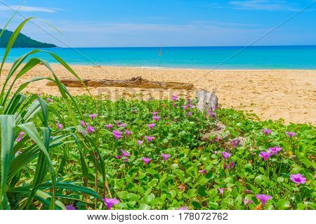 Kata Noi beach with twiner flowers in the foreground travel background, Phuket, Thailand.