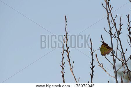 Single leaf on branch showing blue sky