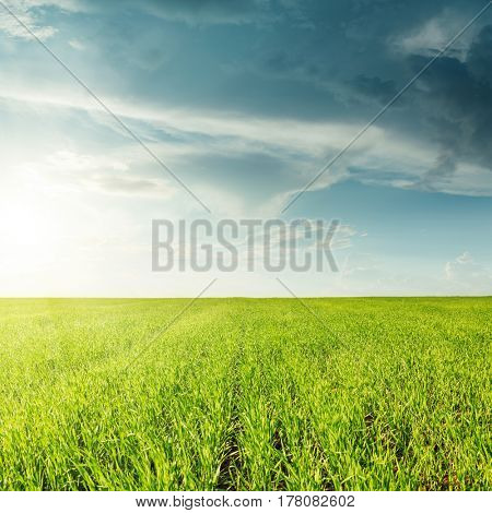 agricultural green grass field and sunset in clouds