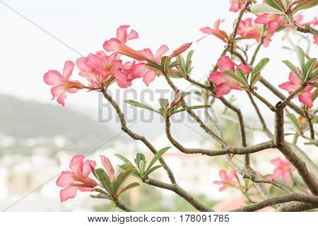 Blossom Branch Over Nature Background