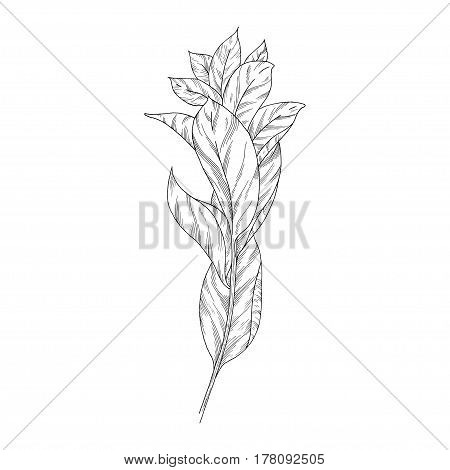 Leaves ink sketch on white background. Vector illustration for your design