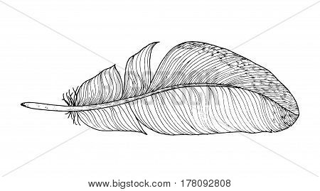 Feather ink sketch. Isolated on white background. Vector illustration for your design