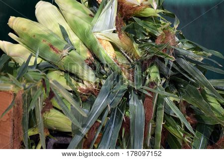 mature corn piled on the mound, at market stall