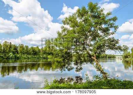 Alone willow tree on the shore leaned over the water of a beautiful lake against the blue sky and white clouds