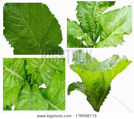 Green leafy lettuce for cooking close-up mix