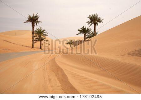 Sand desert dunes and palms in Dubai