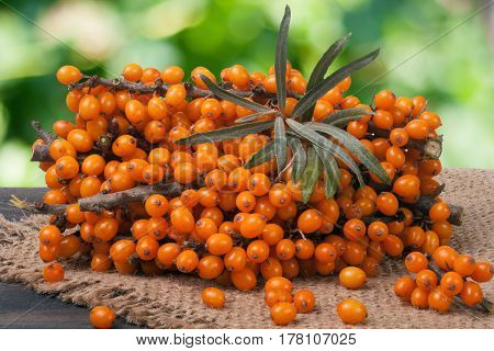 Sea buckthorn branch on a wooden table with blurred garden background.