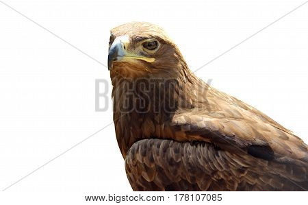 Skeptical Eagle Isolated On White Background.