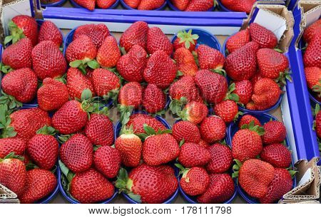 Baskets Ripe Red Strawberries Grown Using The Techniques Of Orga