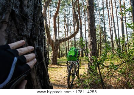 Back view of a bike standing in the forest with a backpack on it. Hand in black cycling mitt on the tree trunk. Somebody is watching the standing bicycle