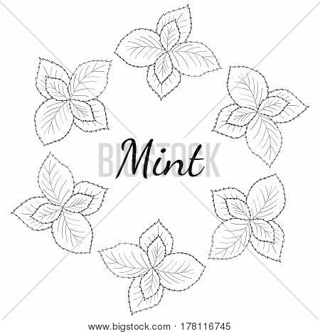 Round frame banner with mint leaves peppermint branch flower hand drawn sketch. Hand drawn spicy herbs doodle cooking ingredient for design packaging.