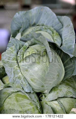 One headed cabbage on top of the pile, photographed close-up
