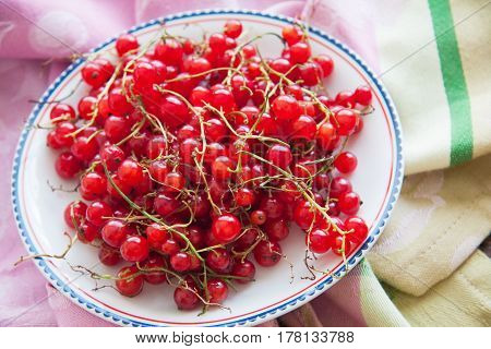 harvest of red currant berries on plate