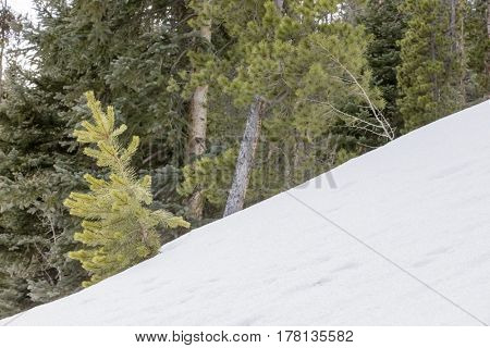 Mountain range covered in snow