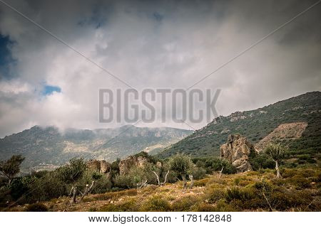 Crete island, Greece. Cretan landscape with rocks and olive trees.