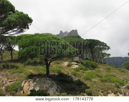 LANDSCAPE, WITH TREES IN FORE GROUND AND MOUNTAIN AND CLOUDS IN THE BACK GROUND