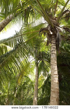 Green palm tree forest for travel background
