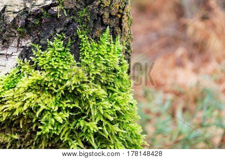 Green moss on a tree with a shallow depth of field and a blurred background. With space for text.