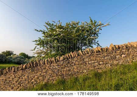 A Country Side Stone Wall Made Of Cotswold Stone.