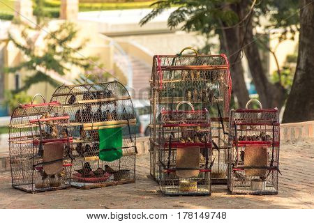5 bird cages full of small birds for sale in the shade near a temple in Cambodia.