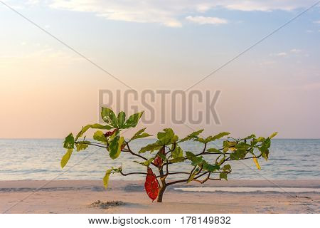 Single sapling tree growing on white sand beach blue sky and sea background.